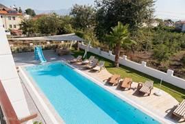 Overzicht grote zwembad (25 m) met tuin