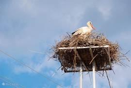 Dalyan staat bekend om haar gevarieerde vogel populatie, op deze foto de ooievaar welke in grote getallen te vinden is in en om Dalyan