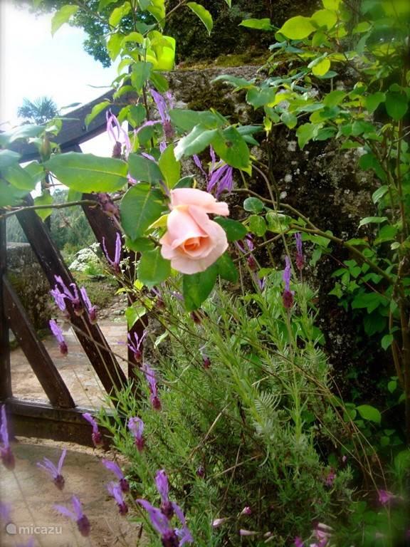 Bloemen op het terras