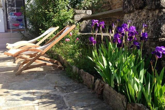 Ons terras met irissen in bloei