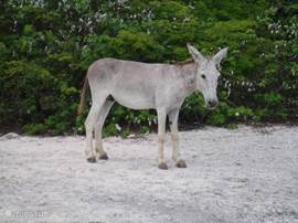Everywhere on the island, you can encounter wild donkeys and goats.