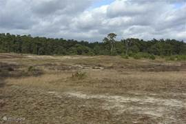 Heide en zandverstuivingen in de nabije omgeving.