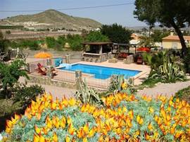 We all year round rent out our rustic finca in the Hondon Valley (Alicante, Costa Blanca). Our fenced area contains of a nice pool with bar and lounge sofa and various terraces. Our garden offers you a lot of space and privacy. Children and dogs are welcome!