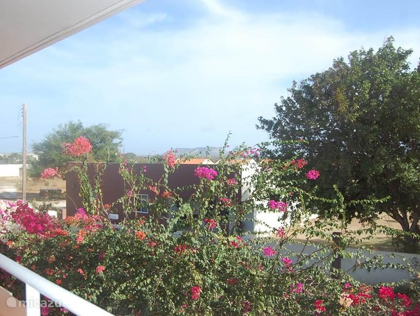 Het achter uitzicht op de Tafelberg en heel veel bloemen!