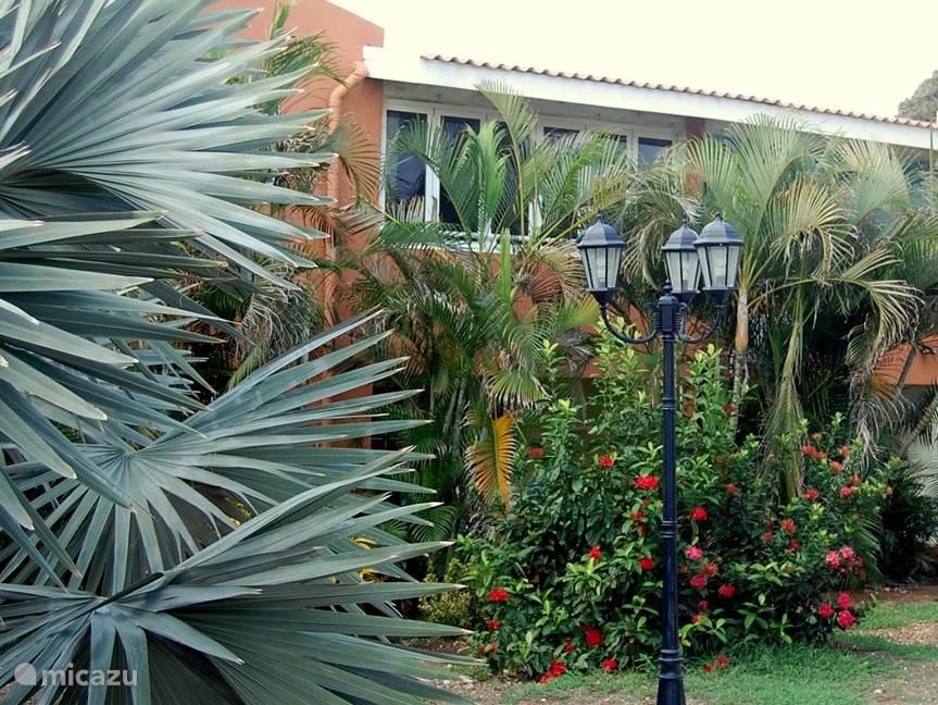 Het appartment gezien vanuit de palmentuin