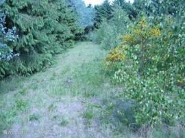 Op het terrein tussen bos en het water met een grote variatie van natuurlijke planten en bloemen