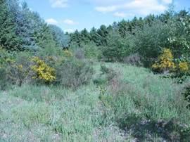 Op het terrein tussen bos en het water  leuk om weg-kruipertje te doen en te kamperen