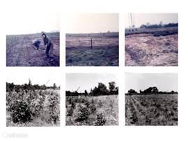 Aanplant bos in 1973