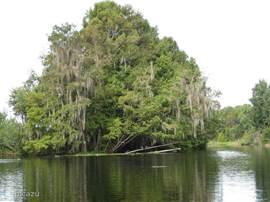 Voor een airboatride hoef je niet naar de Everglades. In de nabije omgeving kan dat ook.