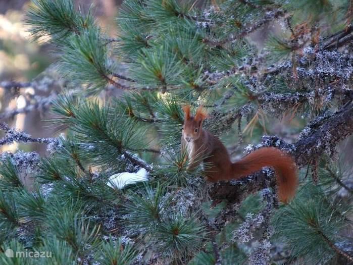 Eekhoorntjes dagelijks te zien rondom het chalet
