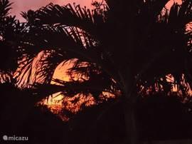 Uitzicht met zonsondergang in de tuin.