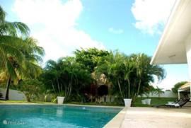 Groot zonneterras rondom het zwembad.
