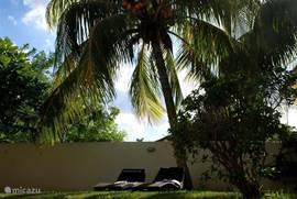 Heerlijk in de schaduw onder de palmen