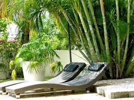 Zonnebedjes onder de palmbomen