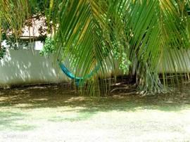 Fijne hangmat om lekker in te luieren onder de grote schaduwrijke tropische boom