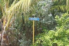 De Bosweg is de groenste en mooiste laan in Julianadorp