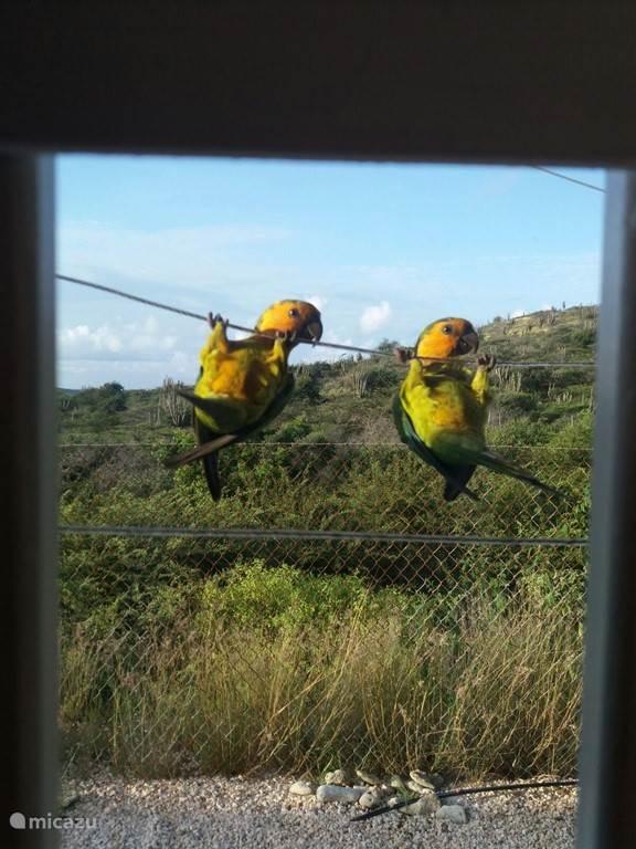 Wakker worden door de papagaaitjes ipv de wekker, Deze foto is vanaf ons bed genomen