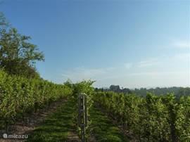 Wijngaarden alom.