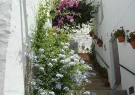 Een van de smalle, steile straatjes in Cómpeta.