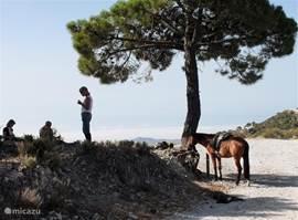Paardrijden met instructie in het natuurpark.