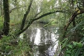 De kreken in de Biesbosch zijn elk jaar getij een beleving en kent een mooi biotoop.