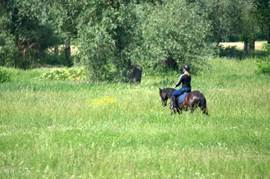Do you love riding then the area of ??Puszta Eldorado paradise. There are several stables where you can rent a horse and you can explore., With or without a guide the wild