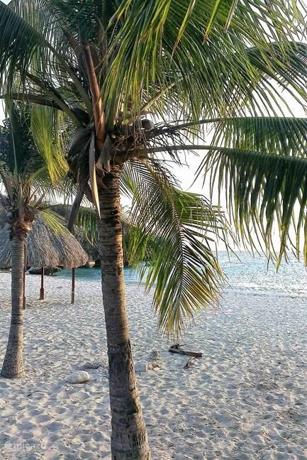 Daaibooi strand een geliefd strandje in de buurt.
