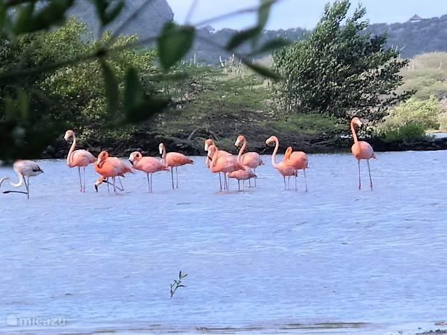 Flamingo kolonie in de zoutpannen