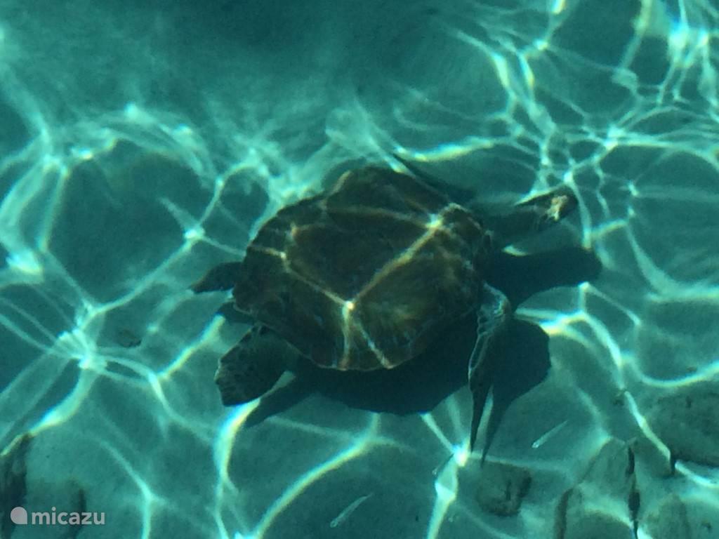 Ontmoet deze prachtige dieren in hun natuurlijke lagunes in de mooie streek Banda Abou