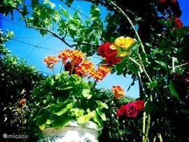Overal bloemen in de prachtige tuin