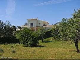 Casa da Mó is gelegen in het ongerepte Centraal Algarve dat bekend staat om zijn groen natuur en de prachtige lagunes. Hier ziet u de villa door de olijfbomen  die u in de zomer zelf kunt plukken en eten.