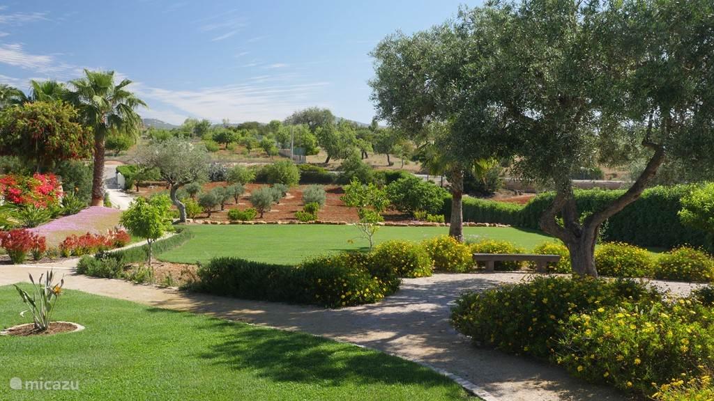 De grote olijfboom waar vaak verse olijven aan hangen. Ook hier kunt u zitten en de olijven zien groeien, als u geduld heeft tenminste.