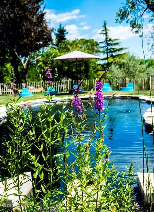 De nieuwe zwemvijver kort na zijn ingebruikstelling. De planten, geplant in een apart deel, zuiveren het water. Geen chloor, geen zout, een weldaad voor de huid.