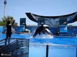 Sea World ligt op ong. 20 min. autorijden afstand van onze villa. Zeer mooie dolfijnenshows, indrukwekkende orkashows en nog veel meer.
