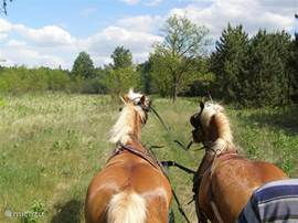A horseback riding or a trip in a coach is possible in the area.