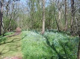 Natuurpark Wildrijk op 500 m. afstand ! Heerlijk om een wandeling te maken vooral in het voorjaar met de vele stinzenplanten.