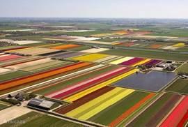 Dit is de Belkmerweg en omgeving in het voorjaar vanuit de lucht. Prachtig al die kleuren !!