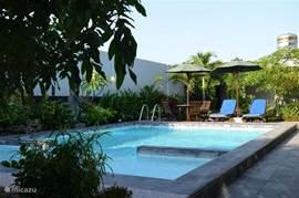 Zwembad met zonneterras, ligstoelen en parasols