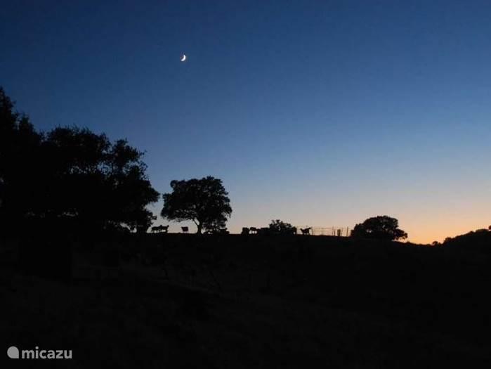 s´avonds op het terras genieten van de stilte...