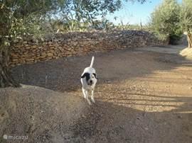 hond heeft 3600 mtr ruimte om lekker los te lopen en u hoeft niet bang te zijn dat hij weg kan lopen