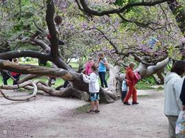 The Sea Garden in Varna. The winding tree is an attraction for children.