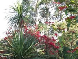 Bloemen- en plantenweelde in de tuin.