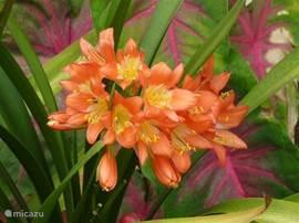 Tropische bloemen in de tuin.