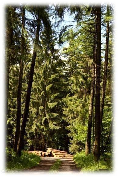 In een prachtig bos, op 5 minuten loopafstand !