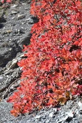 Uitbundige herfstkleuren