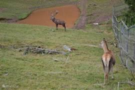 Dierenpark Frankenberg met herten