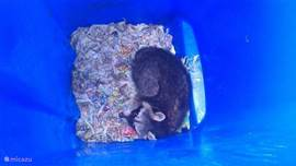 A raccoon has hired this summer our paper container :)