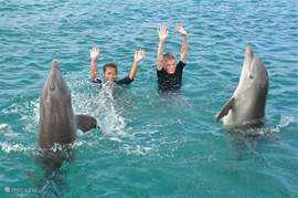 Swim with the dolphins at Dolphin Academy is a great experience for young and old!