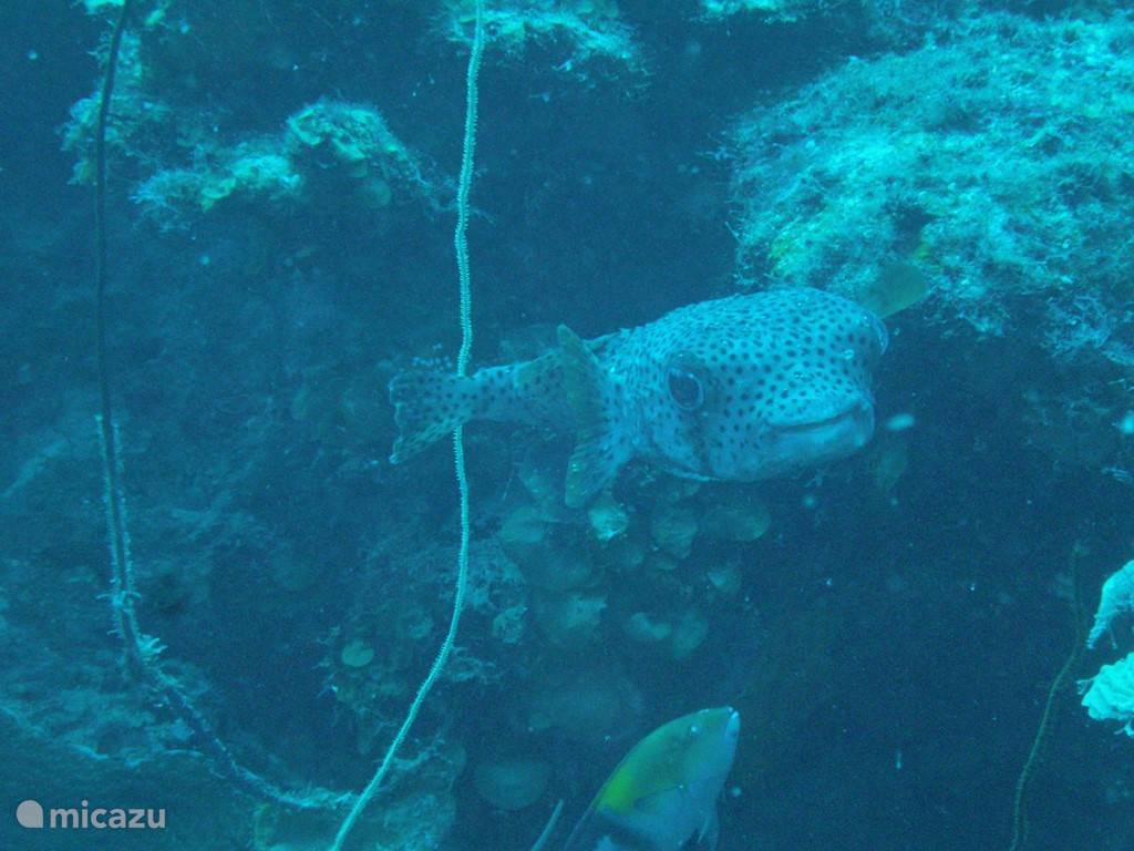 Diving on Curacao is very easy from the beach and reefs are mostly within swimming distance.