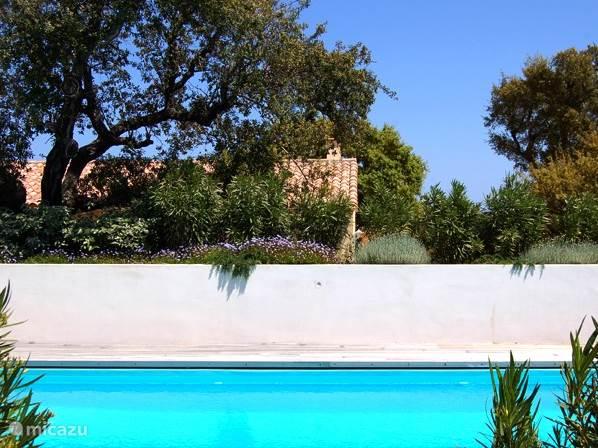 De tuin heeft veel bloemen en fruitbomen zoals, olijven, sinaasappels, mandarijnen, citroenen, vijgen en druiven